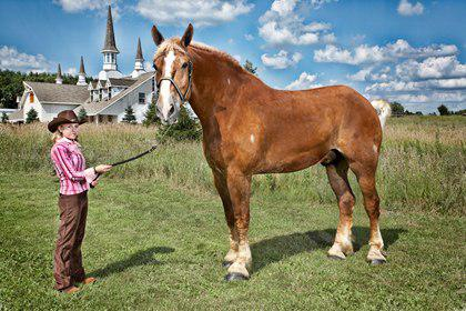 Big Jake - You better watch out when Big Jake is coming your way! This tall horse weighs about 2,600 pounds and has a height of 6 feet, 10 inches. Have you ever had a horse for a pet?