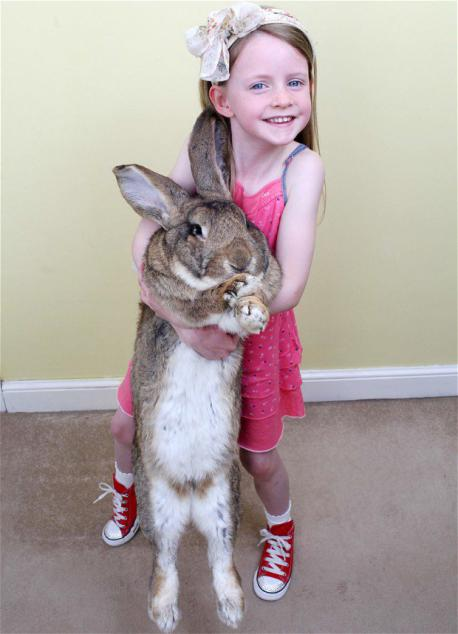 Darius - Darius carries the title of the World's Tallest Bunny. Darius has a height of 52 inches and easily devours copious amounts of carrots and apples. Have you ever had a bunny for a pet?