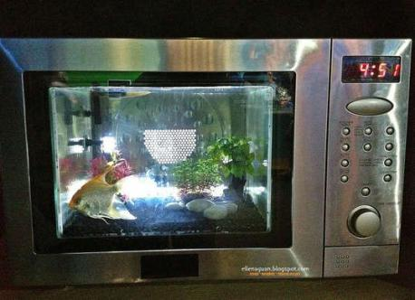 Would you consider taking an old microwave and turn it into an aquatic mansion by filling a cube-shaped fishbowl and inserting it?