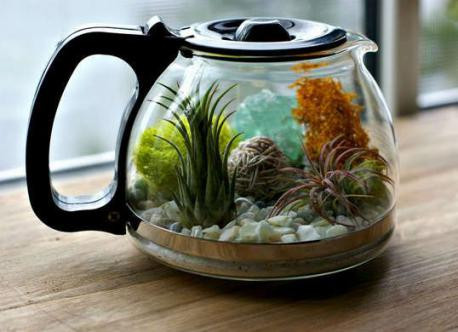 Would you consider taking an old coffee pot and turn it into a charming terrarium by layering the bottom with sand, rocks, and moss before scattering in your favorite succulents for a lush low-maintenance look?