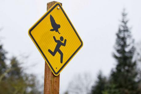 The famous jogger-attacking owl appears to have returned to the town. The Oregon Water Resources Department said two workers were attacked in separate incidents in different Salem locations last Tuesday. The first leaving marks on the man's head and the second knocking a hat off a worker's head. The attacks may have been the work of the same dive-bombing owl blamed for at least four attacks on joggers early in 2015. The attacks inspired the city to recommend hard hats while jogging in certain areas and posted warning signs in areas where the owl has struck. Have you ever been attacked by any flight animal?