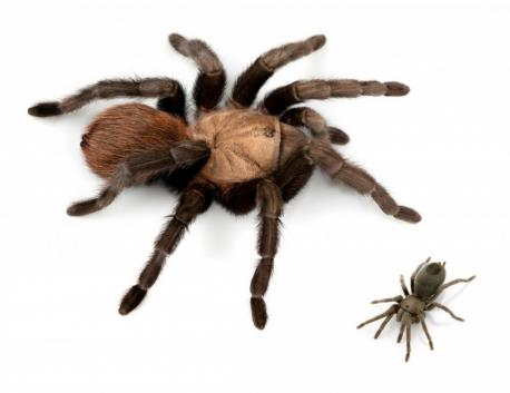 Just when you think there are enough spiders in the world - a new species is found! Are you afraid of spiders?