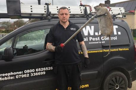 In March, a rat in Grimsby, England, as big as a child sparked fears that Britain is set to become plagued with giant fast breeding rodents. A two foot long rodent was captured after controllers were called in to deal with reports of vermin scuttling along a homeowners patio. S.W.A.T. Total Pest Control owner Jeff Sullivan, 58, confirmed the rat is the biggest one he has encountered in his 18 years working in the sector.