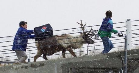 In order to get customers into the Holiday spirit and make the best of what's predicted to be one of the snowiest winters in recent Japanese history, Dominos is training Santa's flight team to deliver a different kind of present this Holiday season. The company is taking this potential delivery innovation seriously and is working closely with reindeer breeders to make it all happen. Would you like to see your pizza delivered by Reindeer?