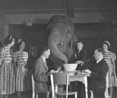 Drinking tea with an elephant in 1939. Do you enjoy a good cup of tea?