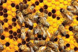 Need an extra special meaningful gift this Valentine's Day that won't make your loved one gain weight or end up in the compost heap? Gifts Of Hope from Plan International or Honeybees from Oxfam America has you covered -- you can give the gift of buzzing bees. It not only launches a livelihood and income for families in need to help pay for housing, health care and food, it's also helping local crops thrive. This gift comes with a hive, honeybees, training and all of the essentials for pollinating a buzzing family business. Now, you don't actually gift the bees to your honey, but give the gift to a family in need. Throw in a jar of honey though, and you have a terrific gift that actually means something! Can't get sweeter than that! Does this sound like a unique gift?