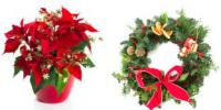 Poinsettias or wreaths?