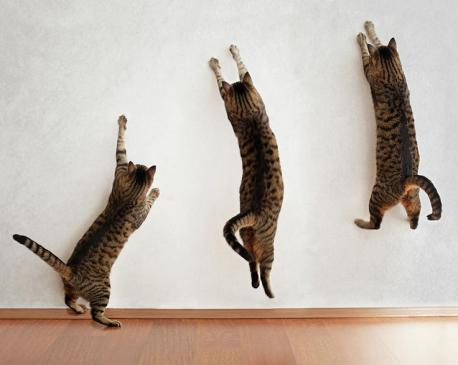 Have you ever seen a cat attempt to jump up a wall, repeatedly?