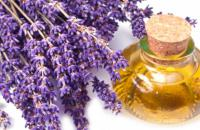 Do you know that lavender has many beneficial uses? e.g. lavender oil...